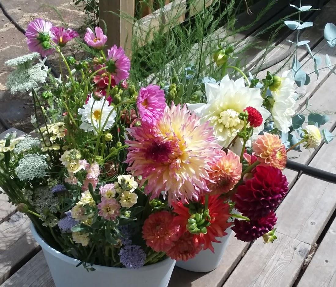 Summer Bouquet Dahlias.jpg