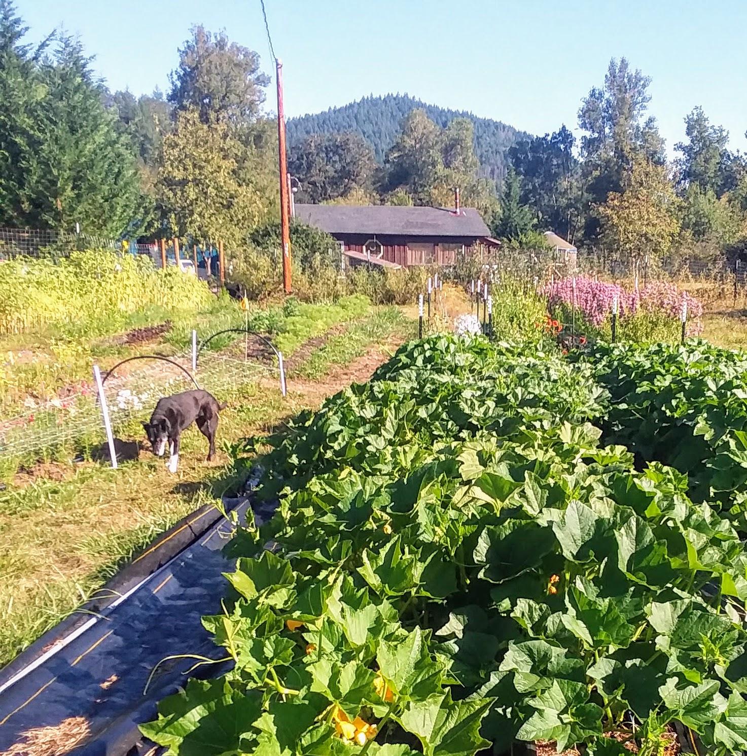 Frida and the farm.jpg
