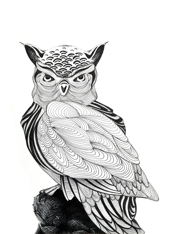 Owl_8x10_lr.jpg