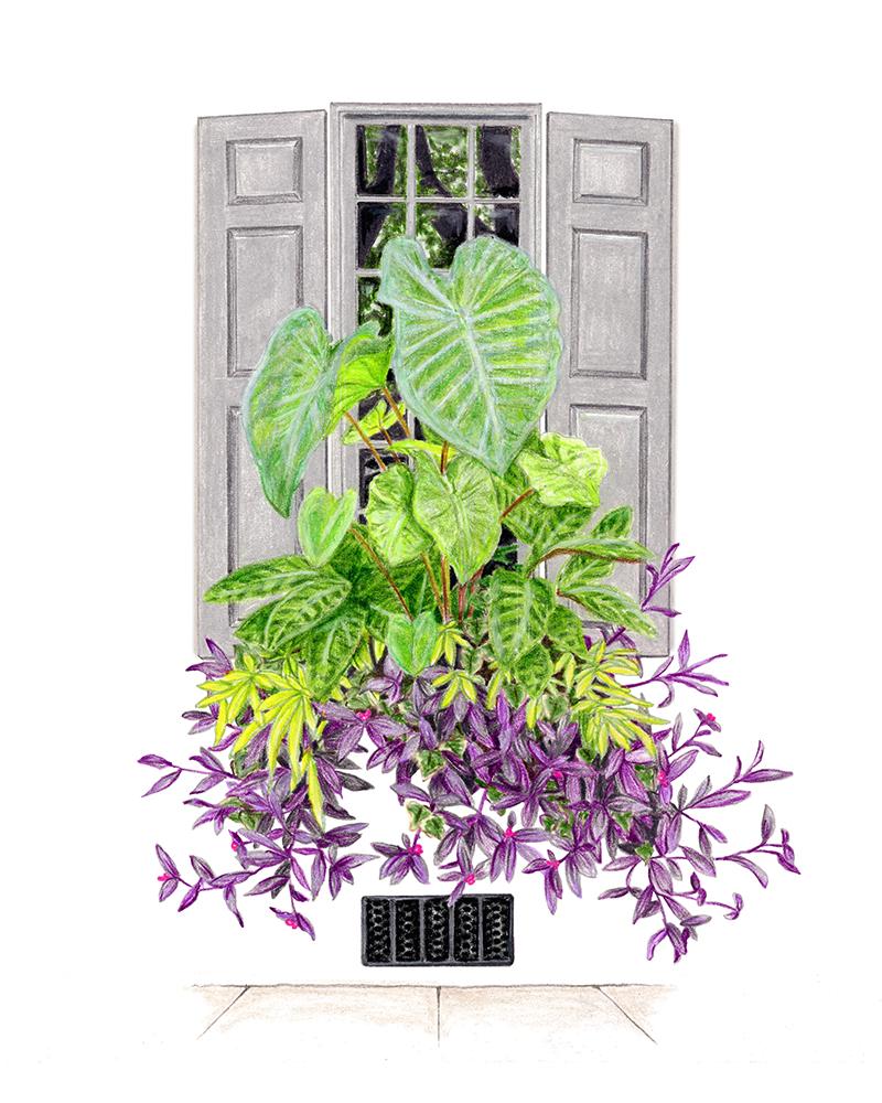 WindowBox_s01_lr.jpg