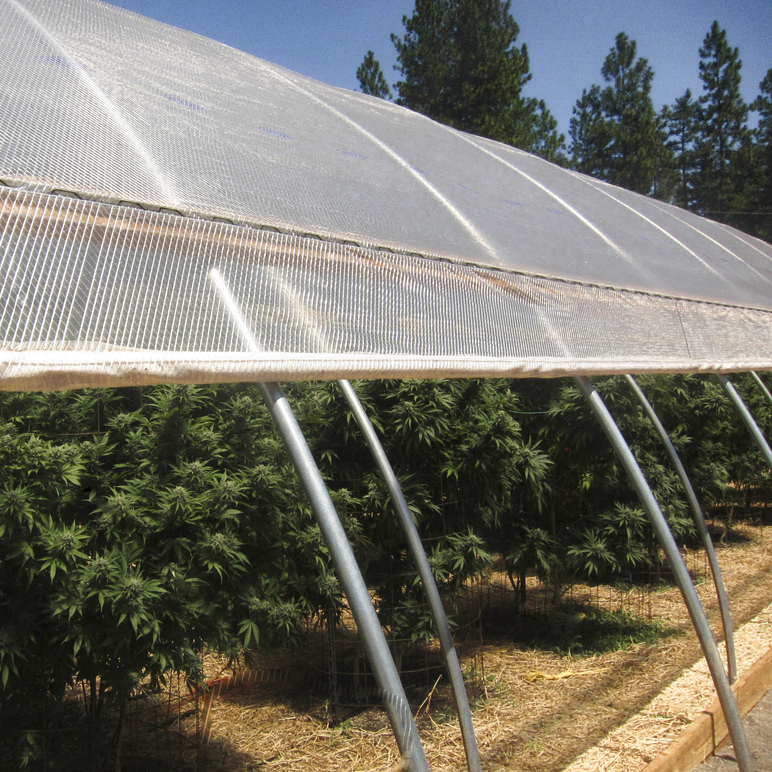 auto light dep greenhouse