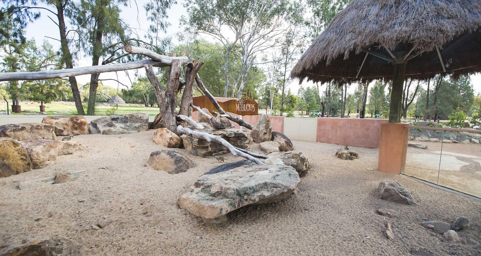 Meerkat Enclosure 4