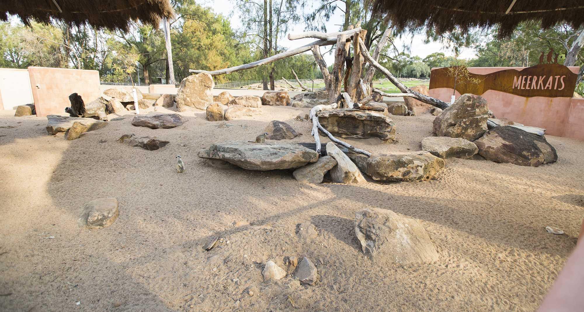 Meerkat Enclosure 5