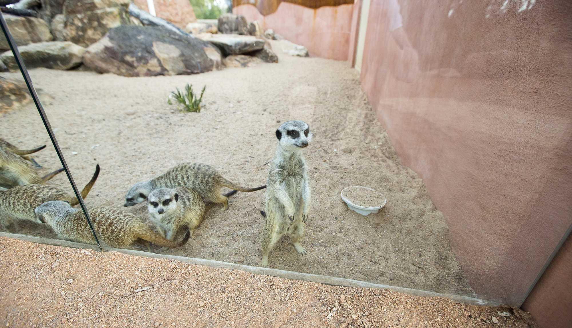 Meerkat Enclosure 6