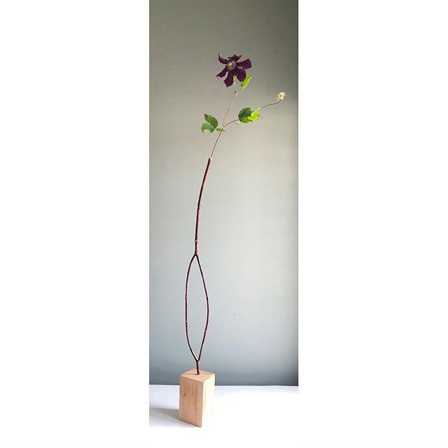 """less is more"" ~ Mies van der Rohe, 1947.  I am striving for ""breathtaking simplicity"" 72 years later.  #pauljarasfloraldesign #floralminimalism #elegantlysimple #floralart"