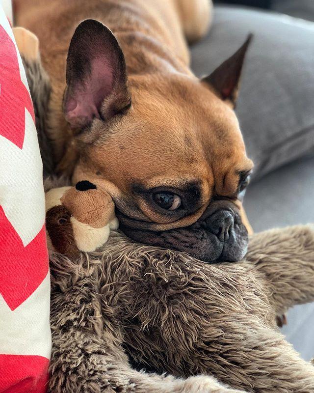 hughes v sloth #frenchielove