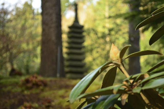 The mysterious pagoda