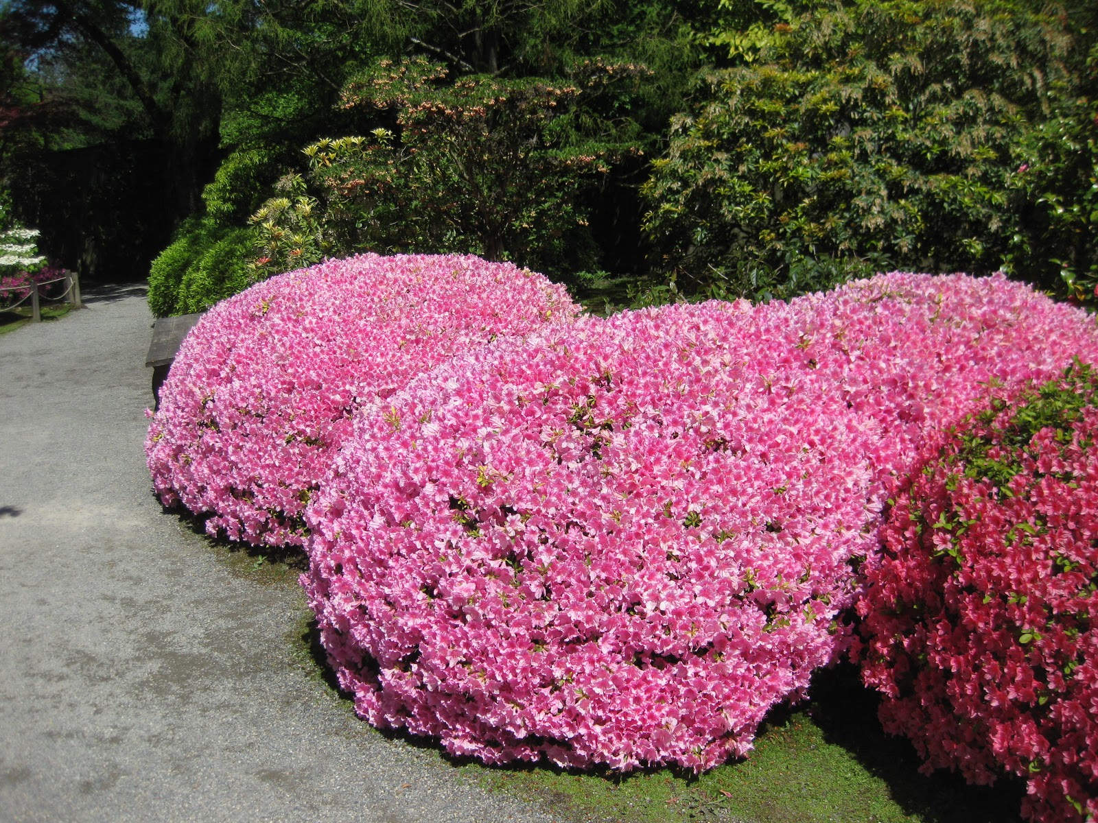 "Tamamono of Rhododendron ""Dawn"" (Photo by Aleks Monk)"