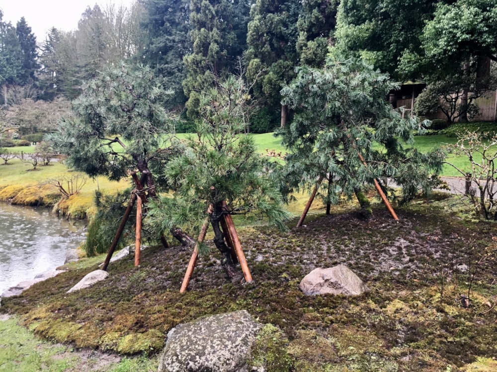 """Moss was gathered and installed as a ground cover. """"We are looking forward to seeing how these trees respond to their new home,"""" says Putnicki."""
