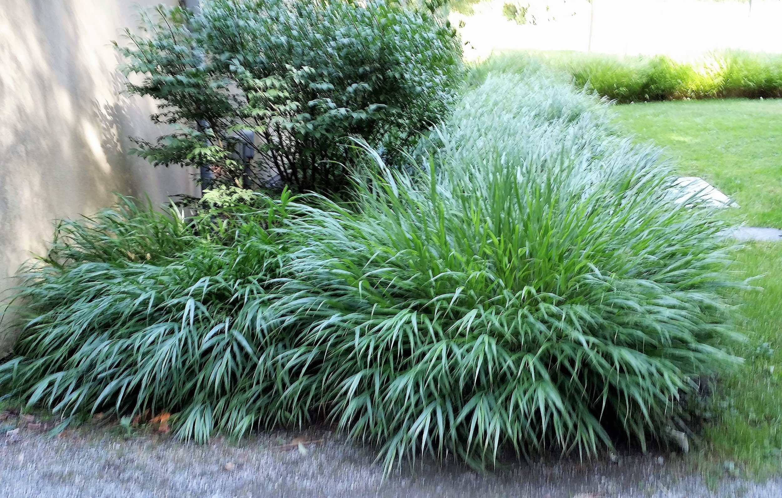 Forest grass outside the Entry Courtyard (Corinne Kennedy, 9/22/17)