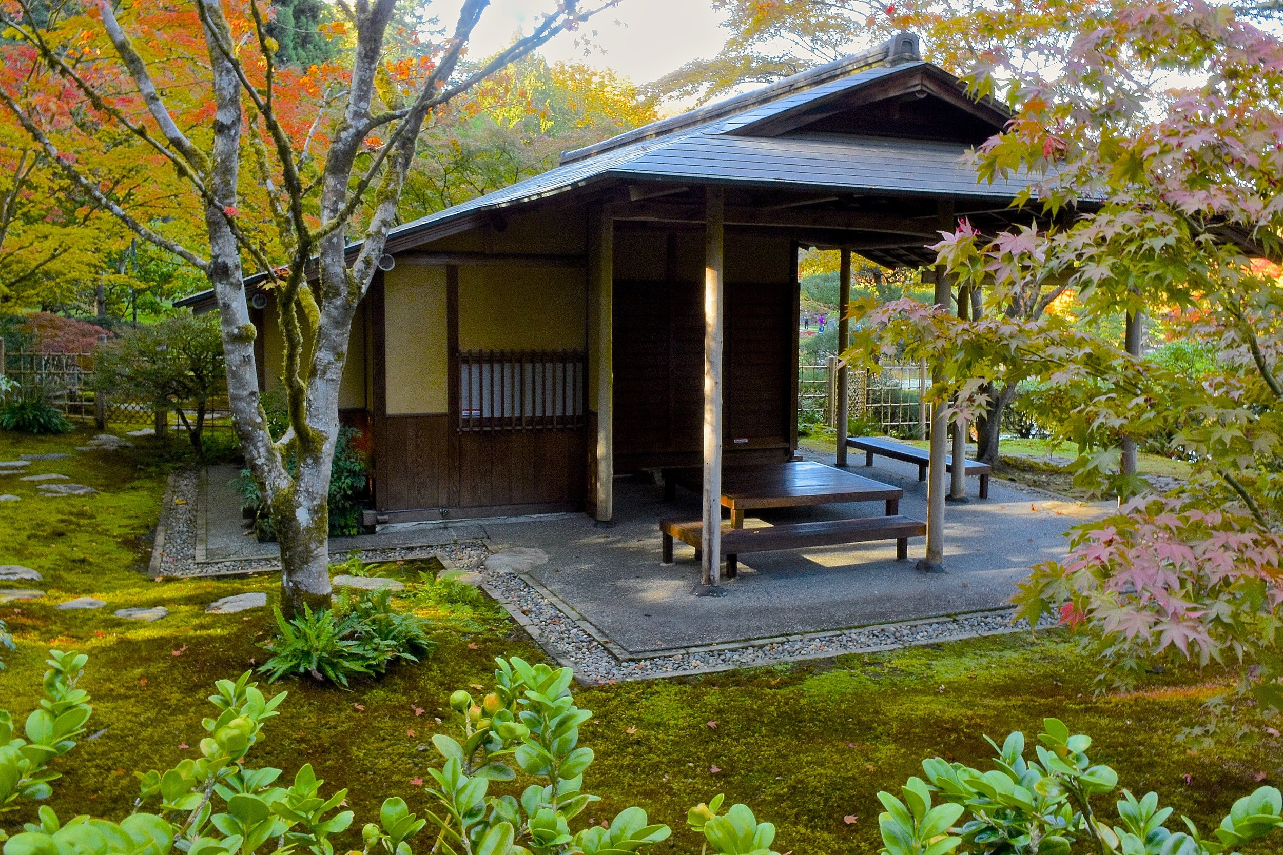 """The Seattle Japanese Garden teahouse,  Shoseian  (translated as """"Arbor of the Murmuring Pines"""") and its inner garden. With the green simplicity of its moss and other plantings, the garden exemplifies Juki Iida's naturalistic designs. (photo: Aurora Santiago)"""
