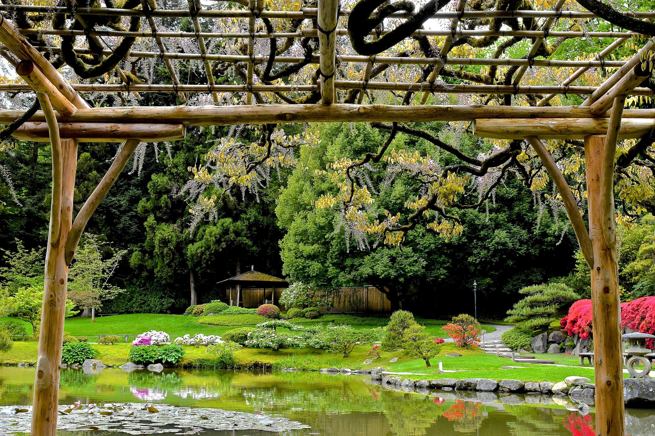 The more formal northern area of our garden, with the pond & wisteria arbor. A fishing village with harbor lantern is on the right, and an  azumaya  shelter is in the distance. (photo: Aurora Santiago)