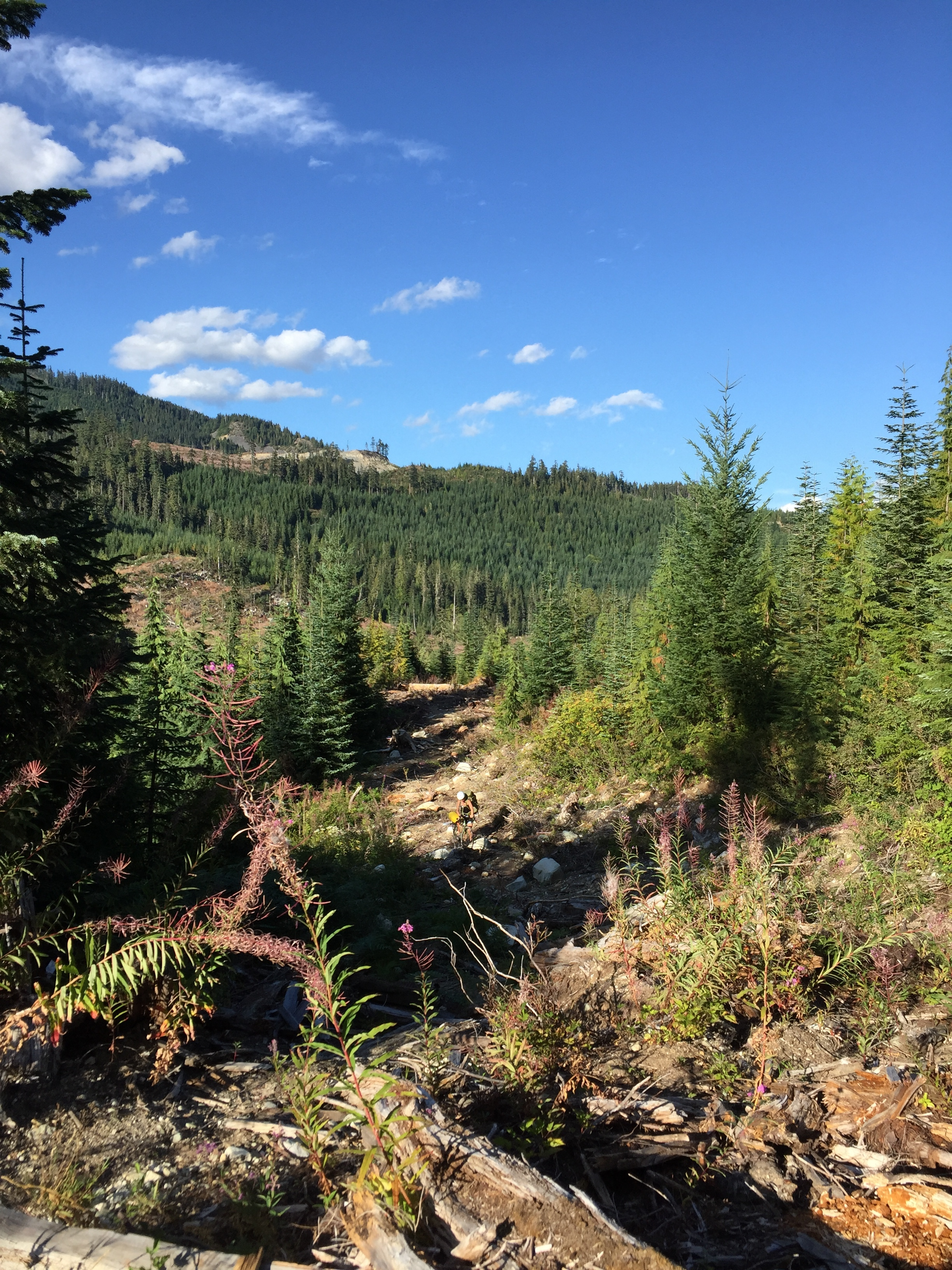 Crossing the gap between the two logging roads.