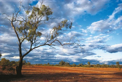 Cunnamulla-Outback-track-Medium-Res.jpg