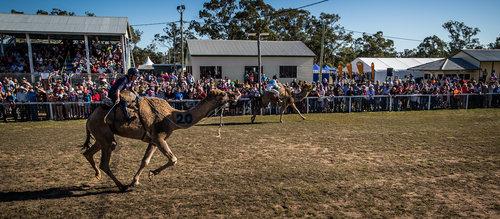 Tara+Festival+of+Camels+and+Culture+(1).jpg