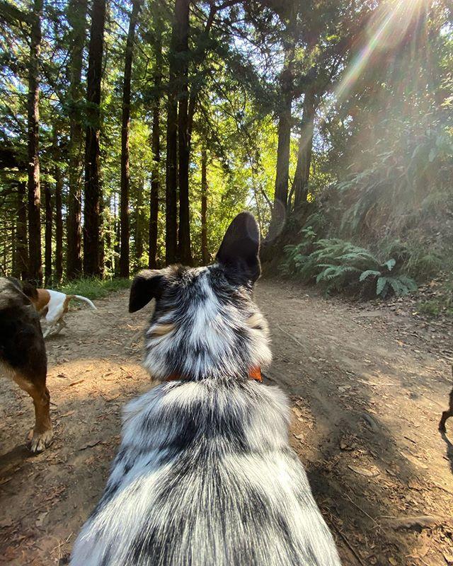 Luke's p.o.v of this beautiful day ✨ #dirtydog #dirtydoghikes #ebrpd #oaklanddogs #oaklanddogwalker #dogwalking #dogwalker #offleash #goodboy