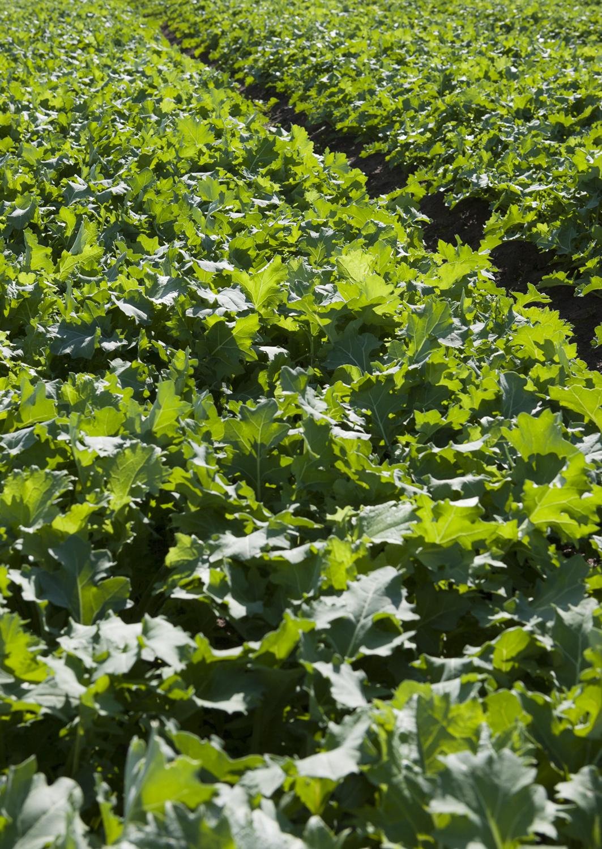 HOUSTEN'S FARM /  TASMANIA