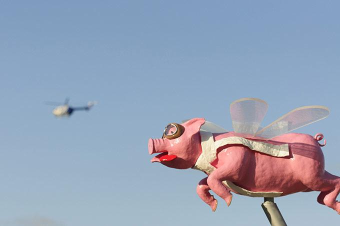 Adrian Hofmann Pigs do Fly