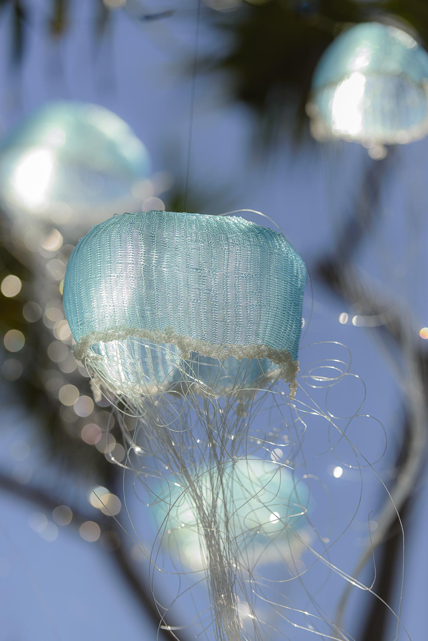 Melissa Hirsch Jellyfish Tree Rowly Emmett Photography