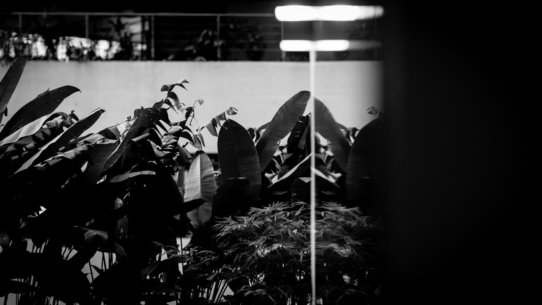 kuala-lumpur-light-tahnia-roberts.jpg