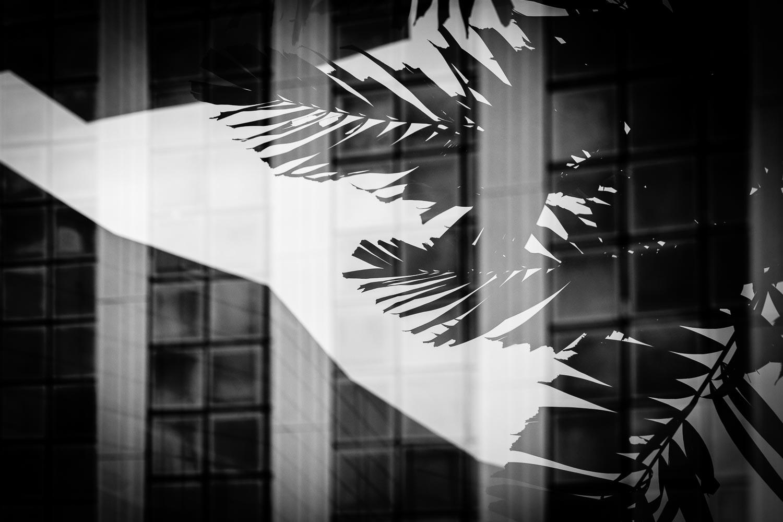 nature-palm=light-tahnia-roberts.jpg