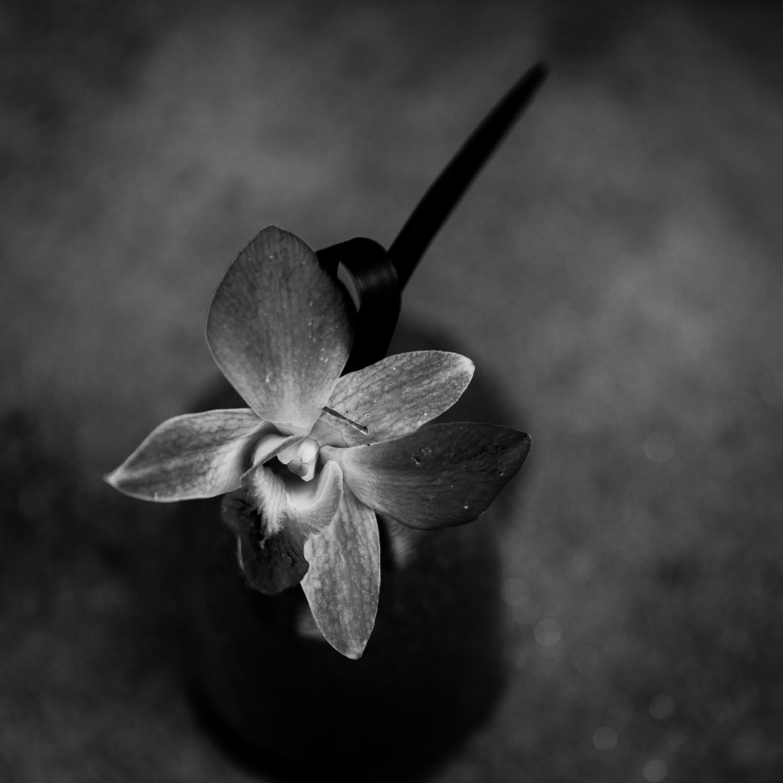 orchid-arrange,emt-tahnia-roberts.jpg