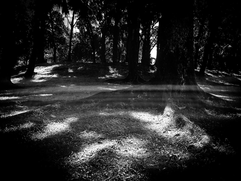forest light stripe.jpg