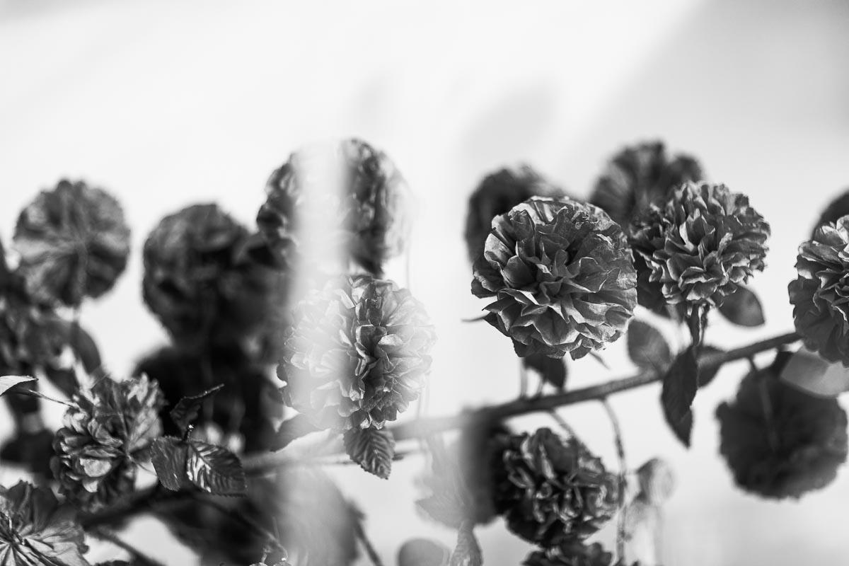 flower-plastic.jpg