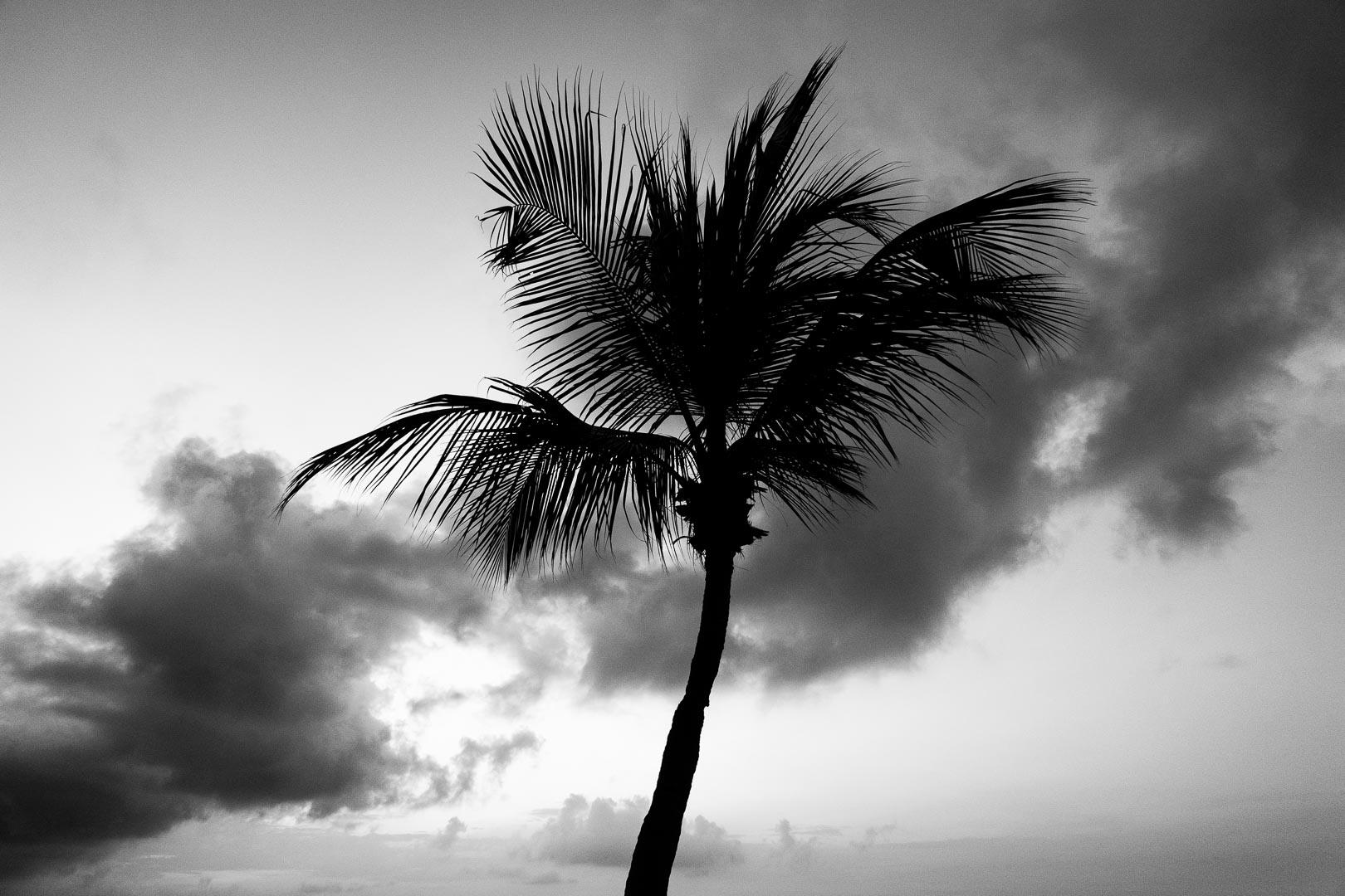 palm-tree.jpg