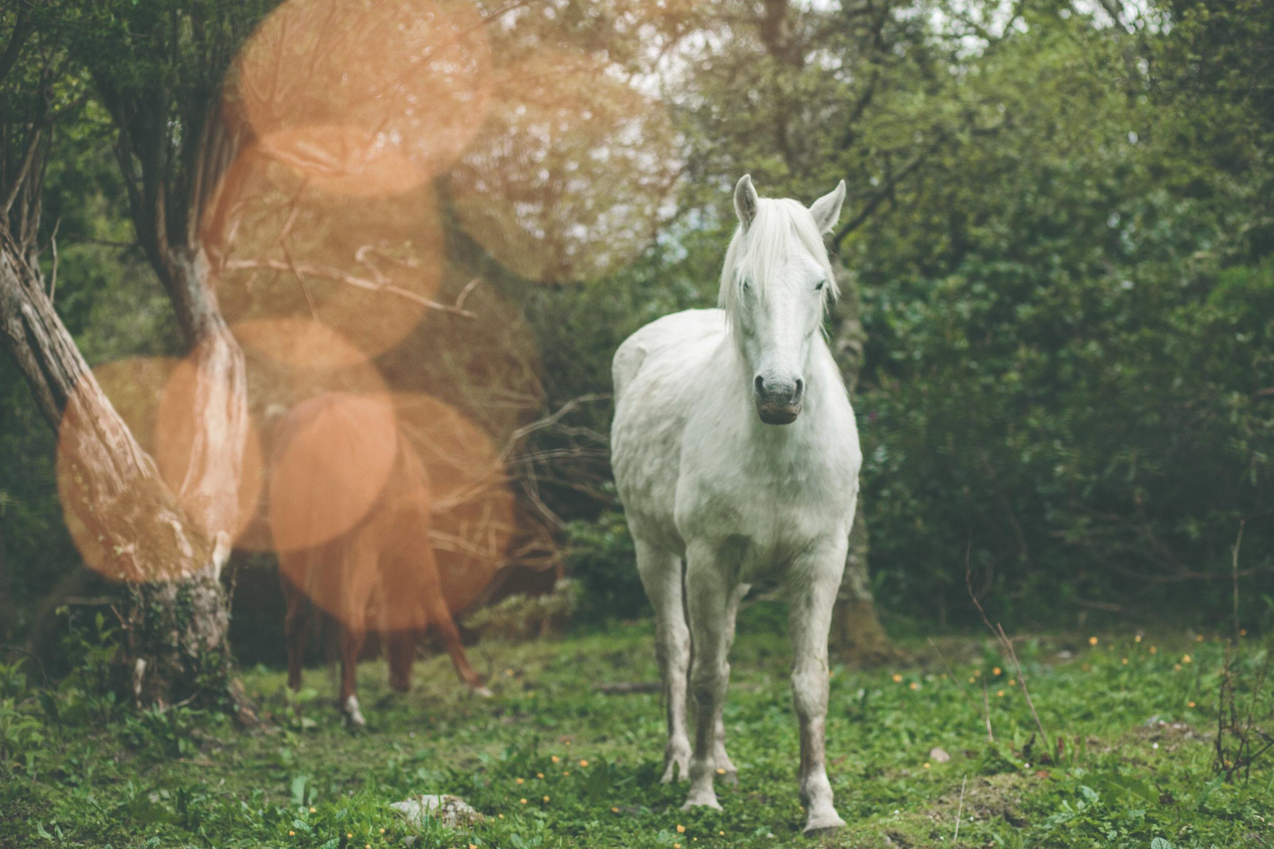 Connemara pony wedding photography
