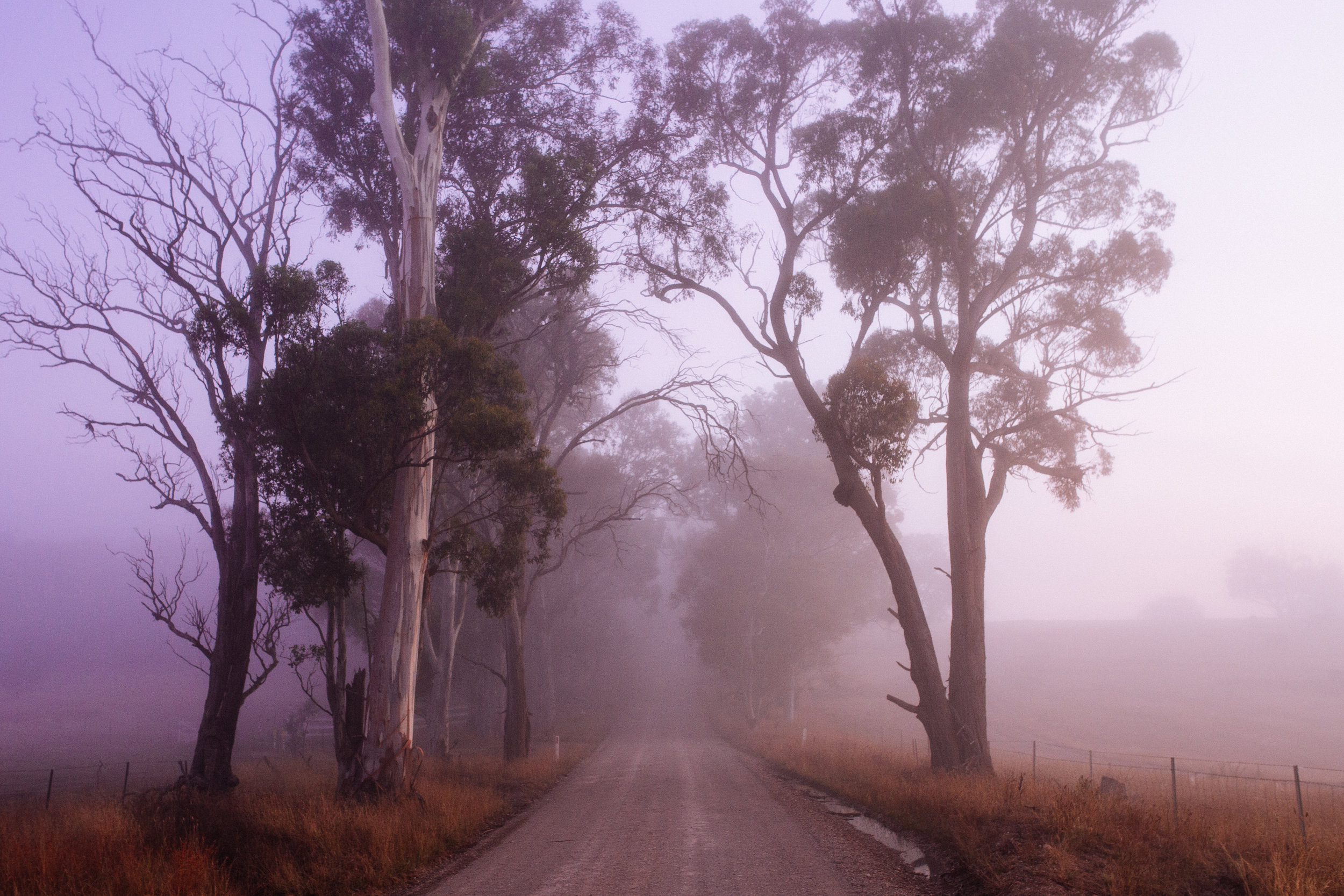 A misty morning in rural NSW, perfect for atmospheric wedding photography!