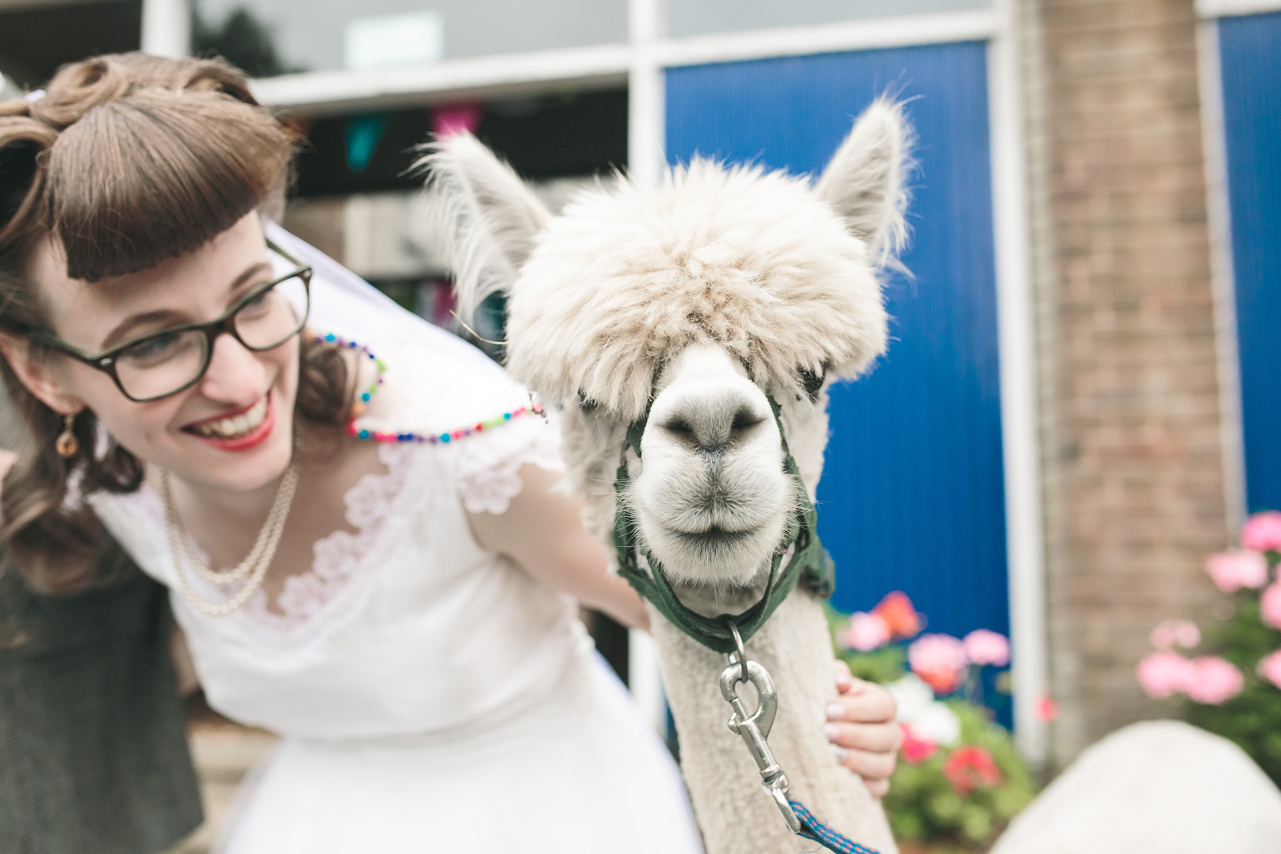 Cornwall wedding photographer Alpaca