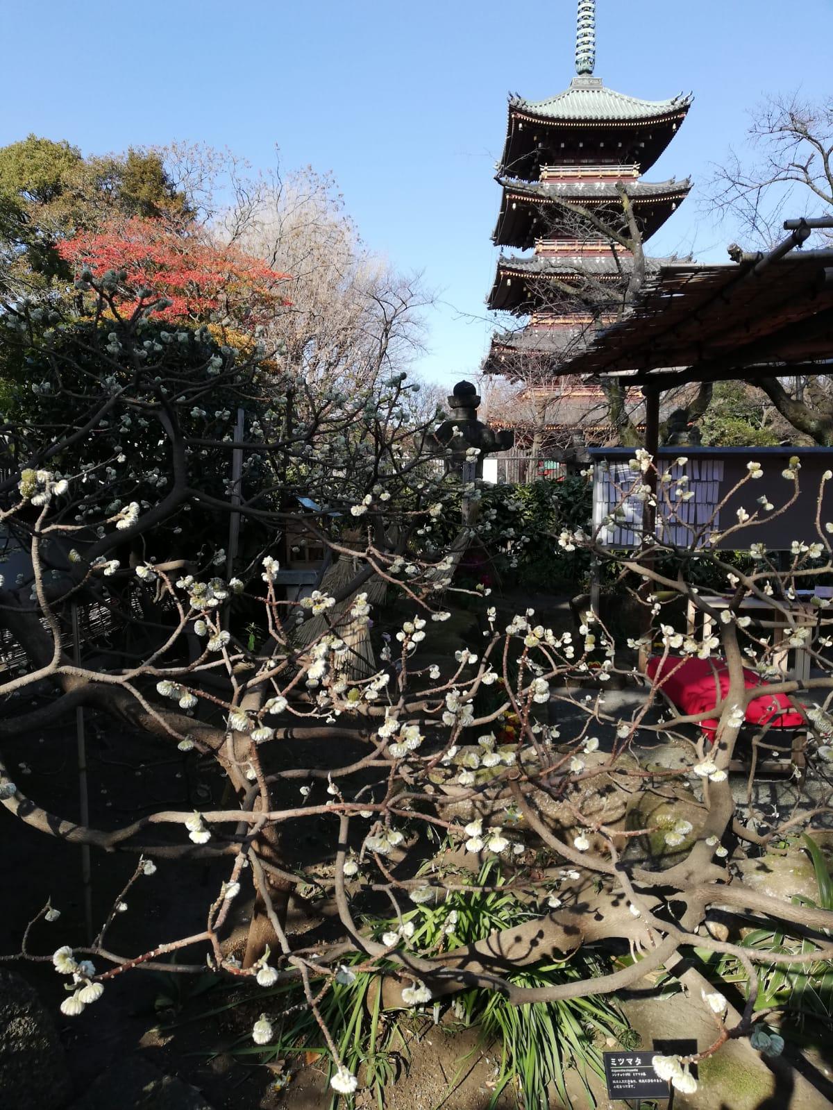 17th Century Shrine, Ueno Park, Japan.