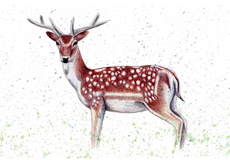 Kerry Dawn Illustration Fallow Deer illustration