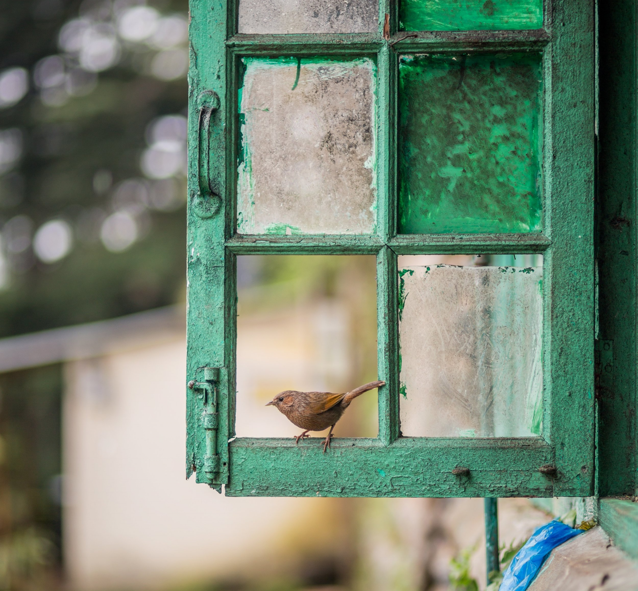 bird in window.jpg