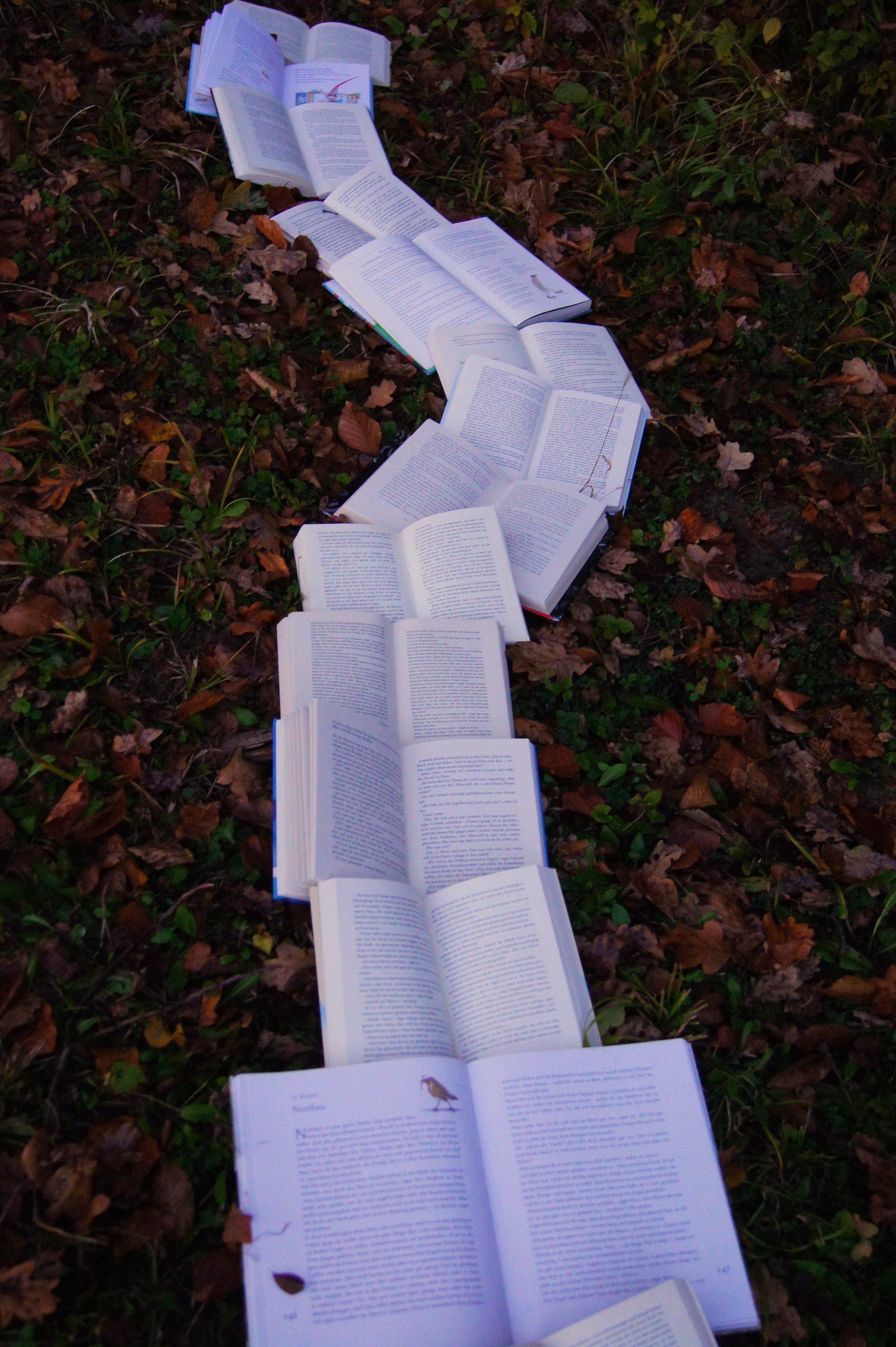 book in a path.jpg
