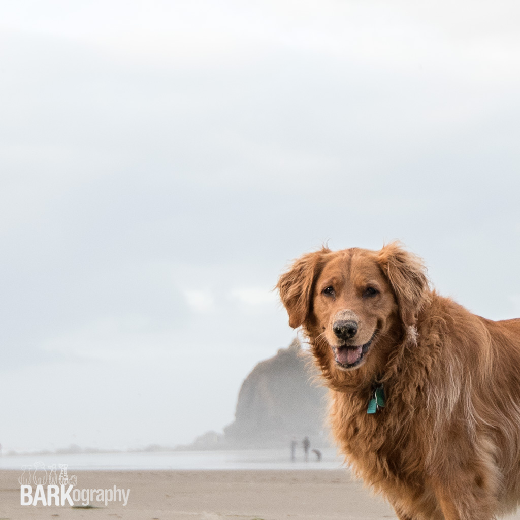 This is Ginger. When I arrived in Cannon Beach my first BARKography destination for dog photography, I didn't know what to expect. Capturing this photo gave me a ton of confidence for the rest of my trip. It's the first photo I posted on Instagram of the photos I took in Cannon Beach and the feedback I got on it also helped my confidence. Thank you to anyone who liked it or commented on Instagram. Those likes and comments mean the world to me. This photo got 26 comments which on my tee-tiny Instagram account is a lot.