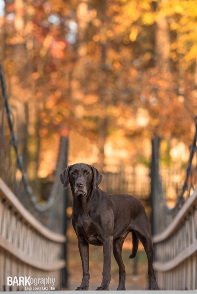 explore possibilities by BARKography Dog Photography