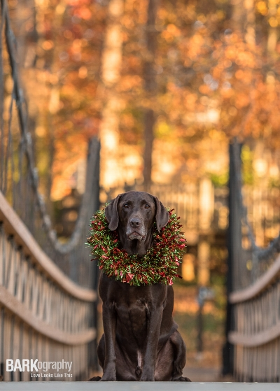 Moose being statuesque WITH a wreath around his neck. He was a really good sport about it.