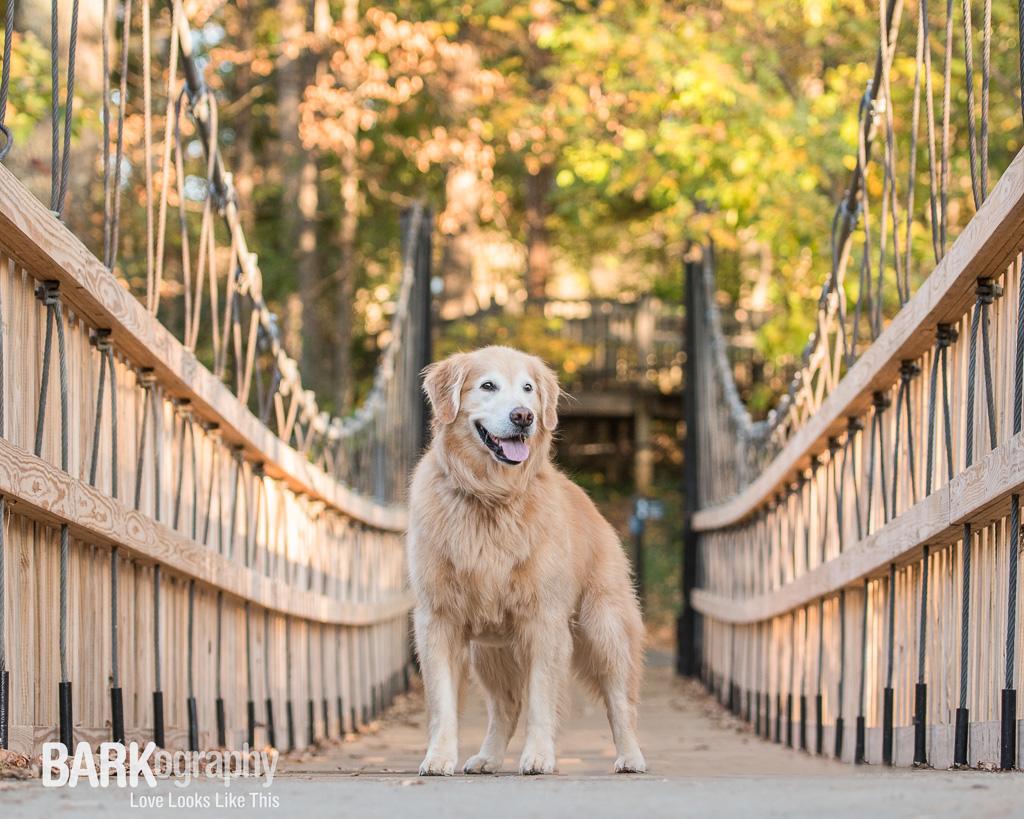 Kappy, BARKography Dog Photography