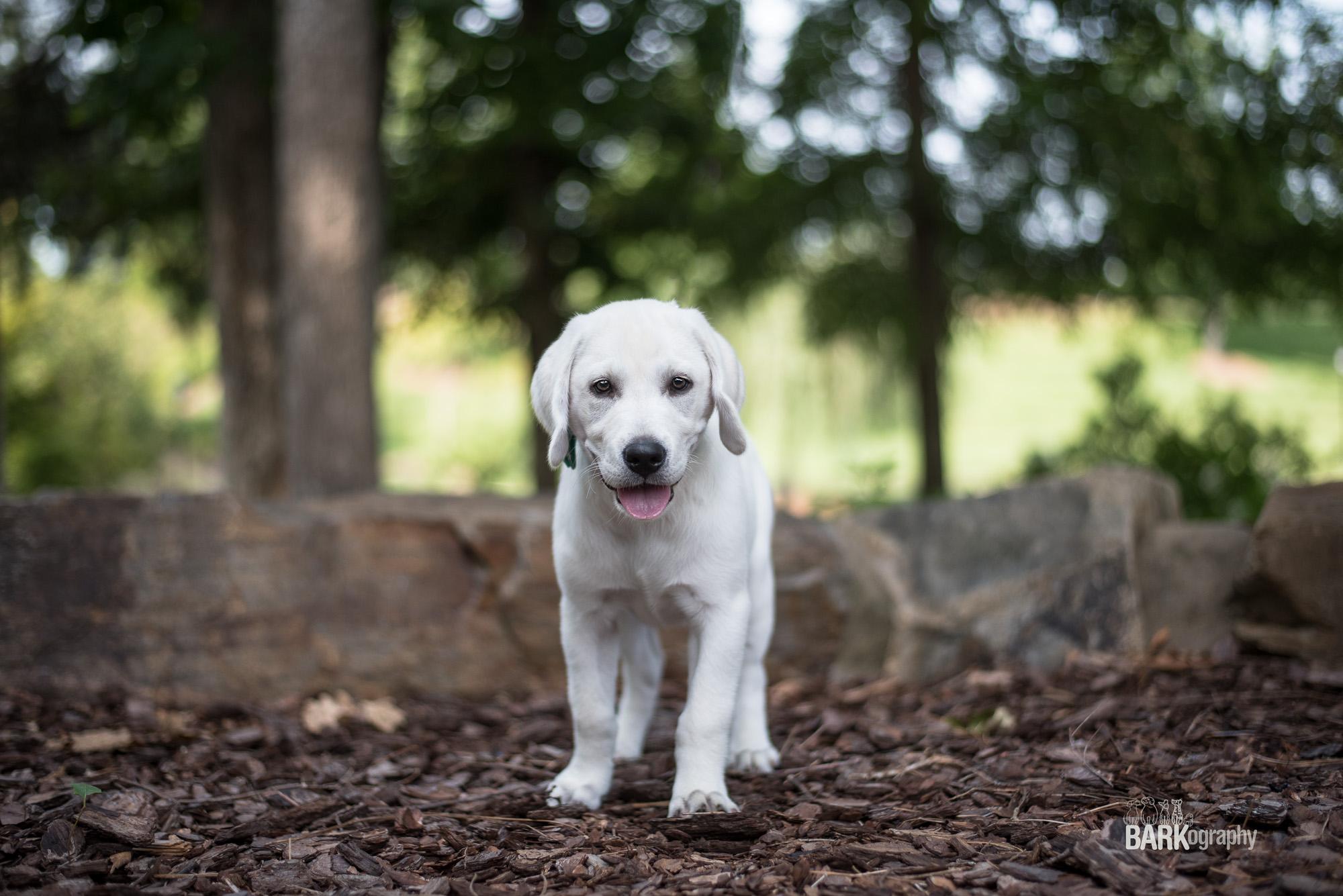 puppy photography.JPG