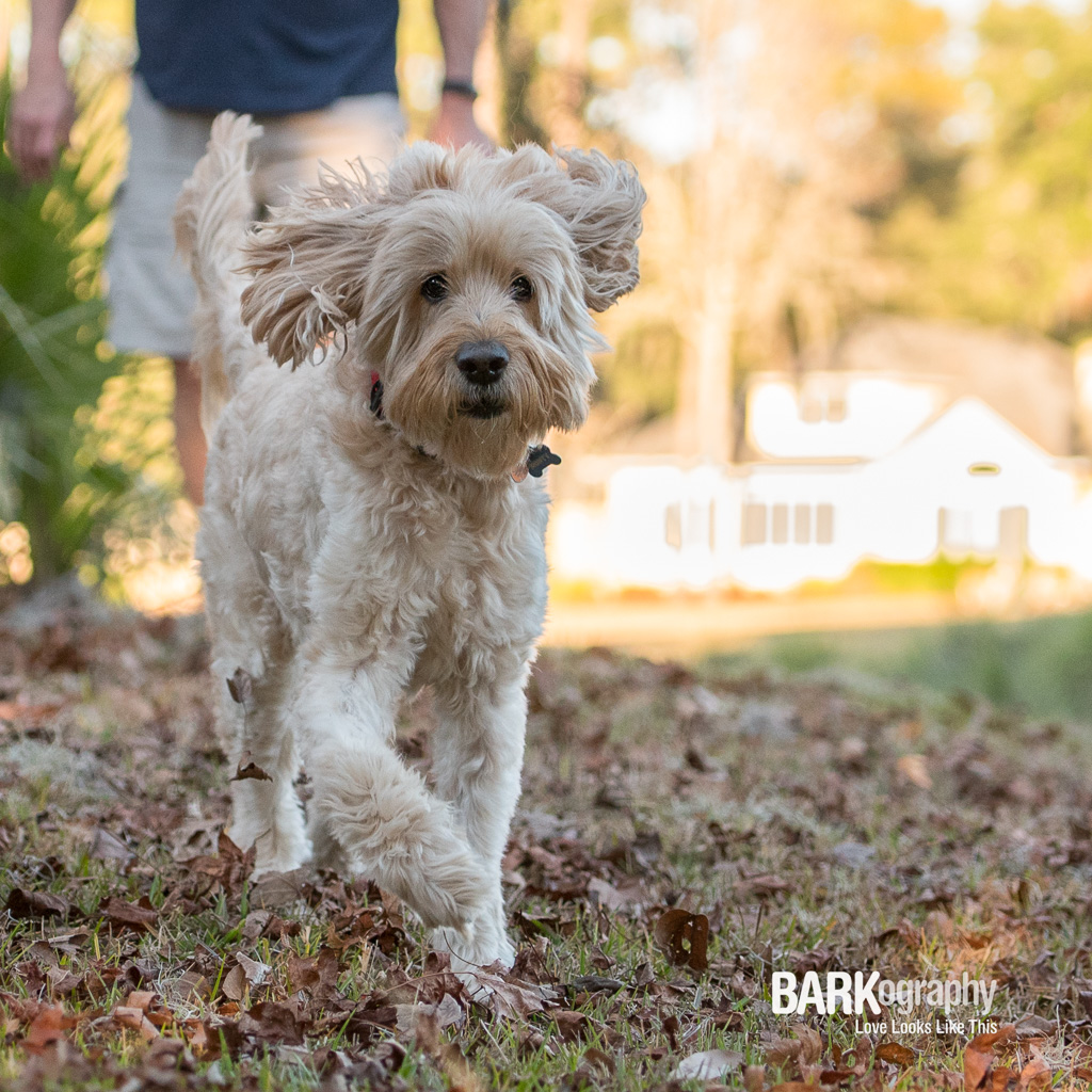 Monty photographed by BARKography.JPG