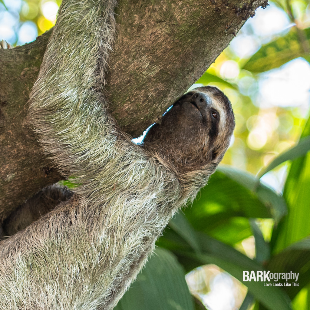 sloth with texture in her fur