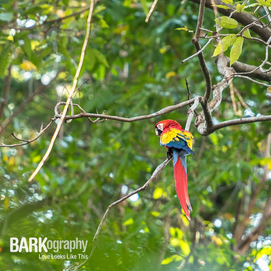 I was hoping to see one of these while I was here. Thank you Mr Macaw, you made my day!