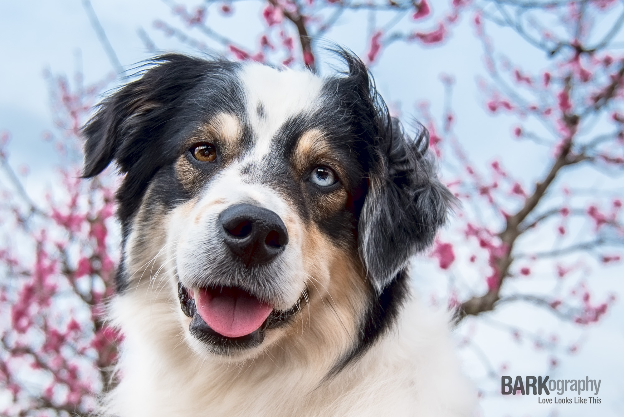 The limbs from the peach trees form patterns behind Berkeley. I rarely get a smile from him so I LOVE this photo of him. Way to go Berk!