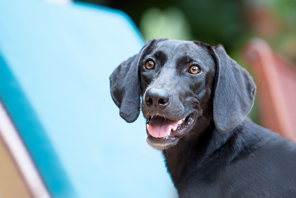 Coco was a lost soul but she found a new lease on life when she was adopted because of her #barkarica photo session!