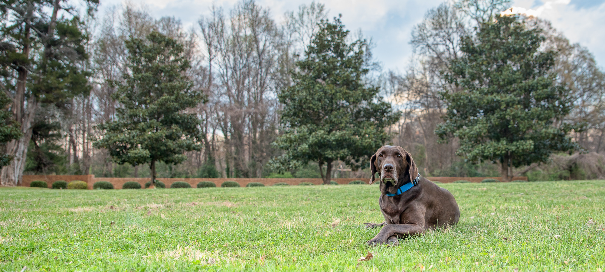 pet and dog photography near me
