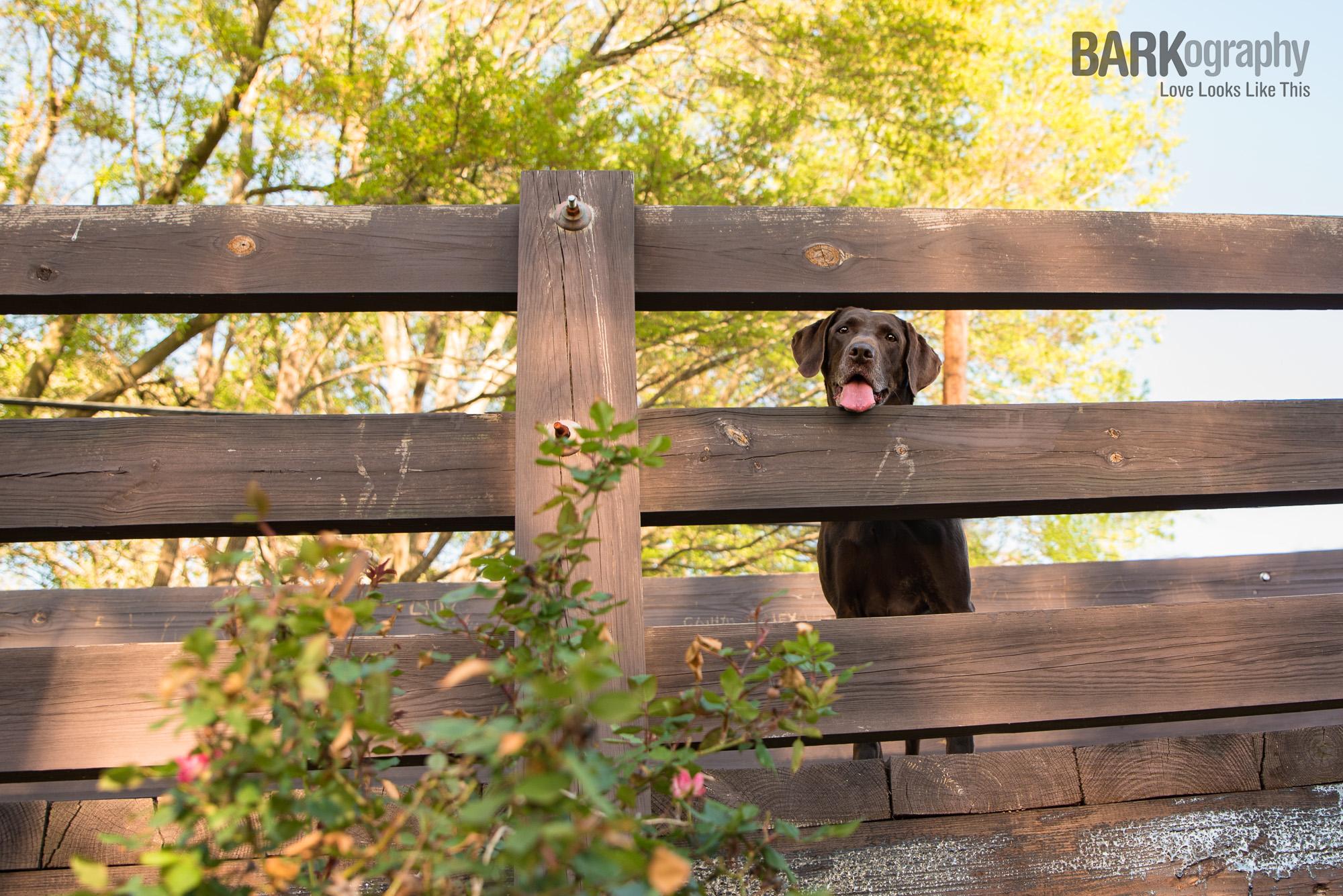 Waxhaw Dog Photographer