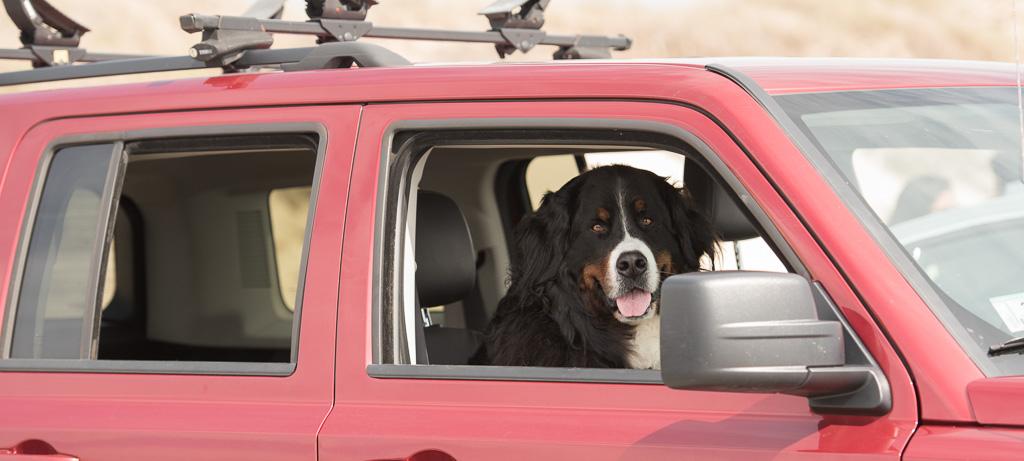 Cape Cod Dog Photographey