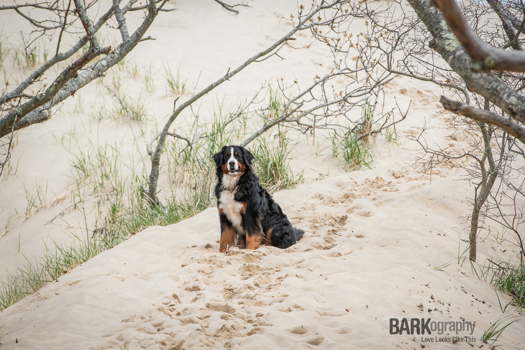 Dog Photography Provincetown Massachusettes